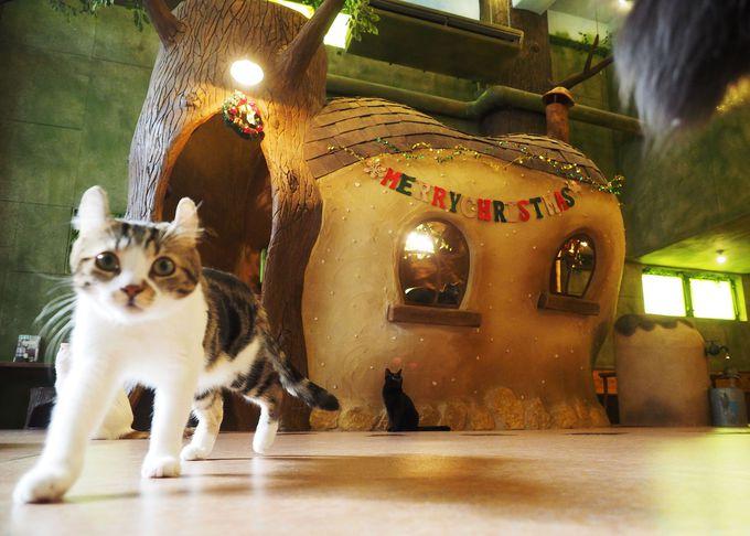 東京都で見つけたおすすめの猫カフェ3選!