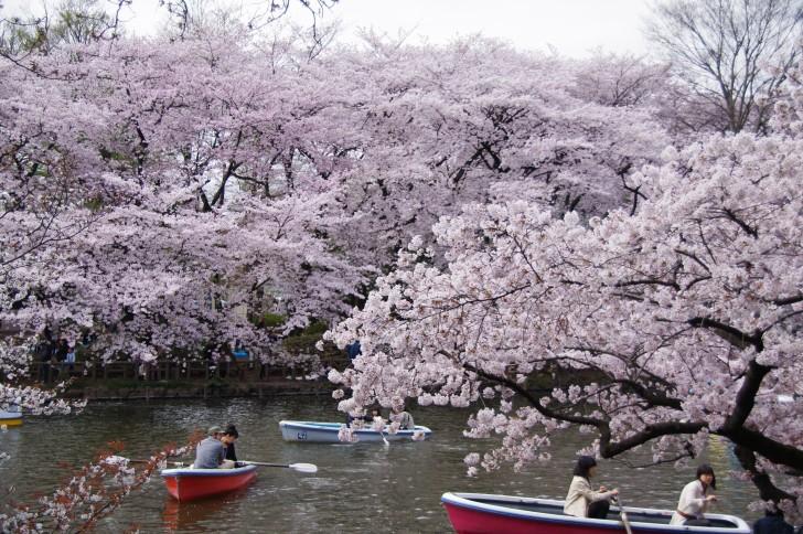 東京でお花見をするならここ! オススメ名所をチェック!