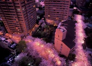 ライトアップが綺麗な東京のおすすめ夜桜スポット3選!