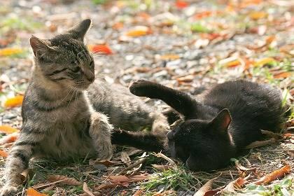 cat0096-066
