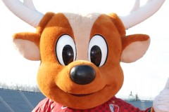 pic_antlers