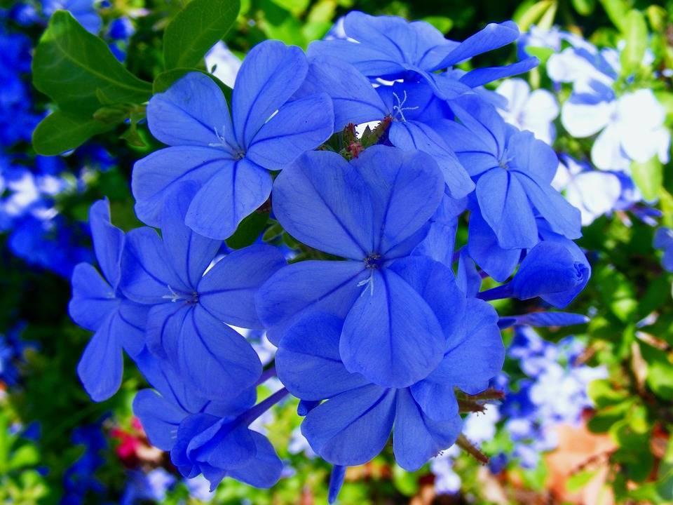 flower-191072_960_720