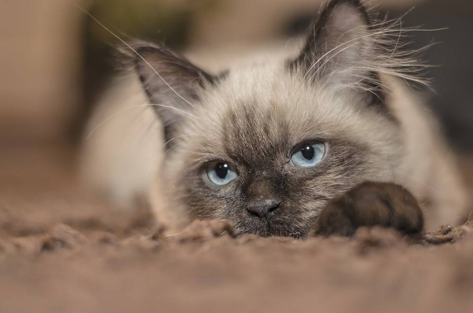 cat-1613088_960_720